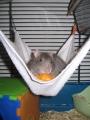 rats-022.jpg
