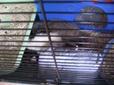 bouteille_congelee_rat_chaleur_4