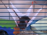 rats-008.jpg