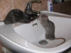 rats-036.jpg