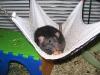 rats-026.jpg