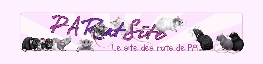 PARatSite, site de rats domestiques